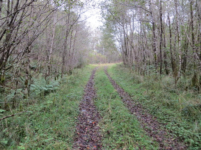 Track into woodland at Coille Mheadhonach