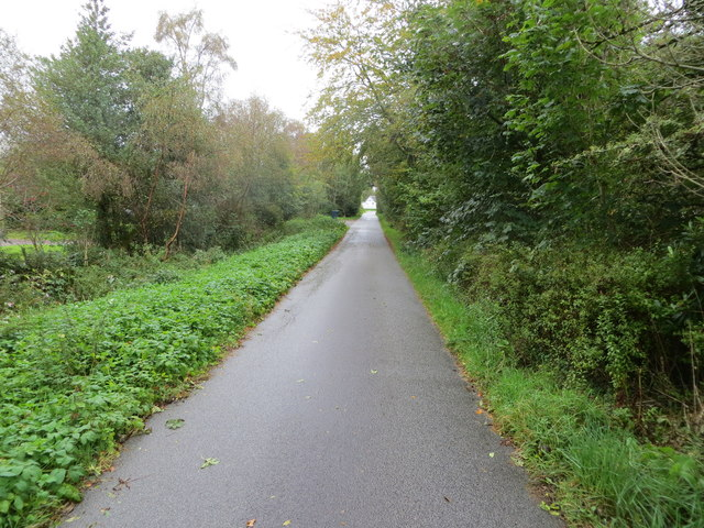 Tree-lined minor road approaching Baravullin