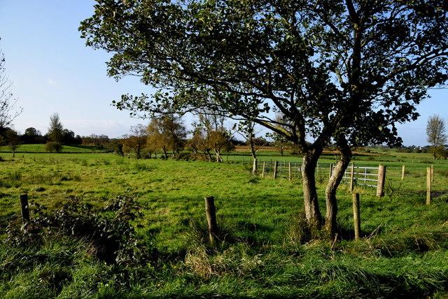 Tree, Deroran
