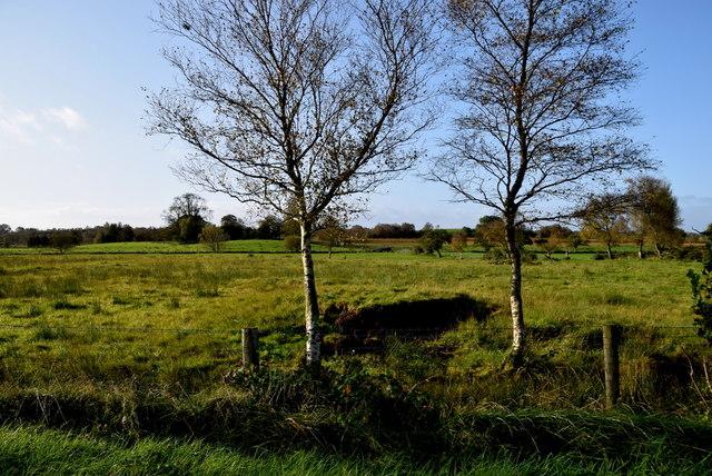 Trees, Deroran