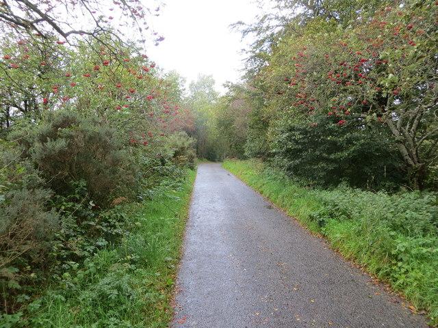 Tree-lined minor road between Baravullin and Kinloch
