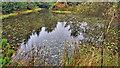NZ8801 : Pond, Sneaton Forest by Mick Garratt