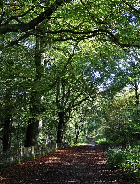 In Early Autumn - path to the east of Lenny Hill