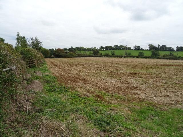 Field beside Ell's Lane