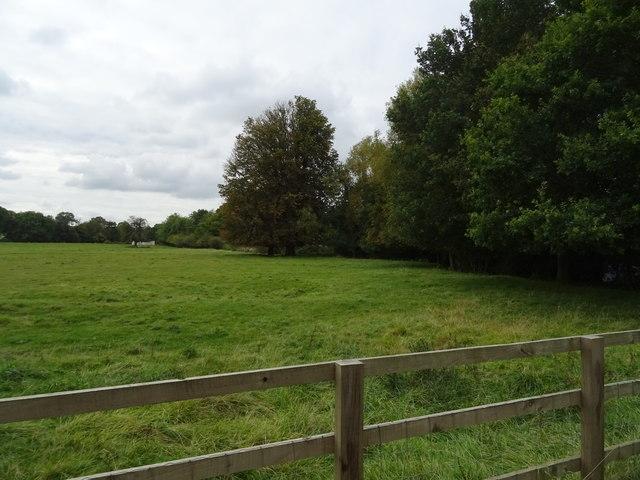 Grazing near Broughton Castle