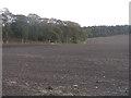NT0390 : Newly sown field at Cowstrandburn by M J Richardson