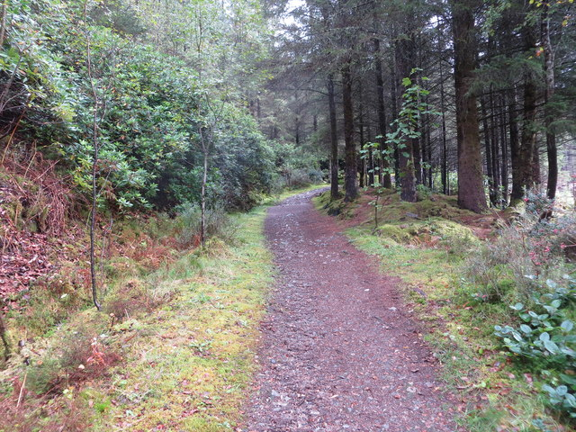 One of the numerous signed Forest Trails at Glencoe Lochan