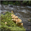 J4681 : Fungi, Crawfordsburn by Rossographer