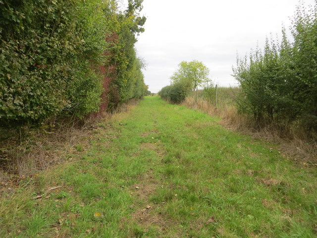 Grass track and footpath following edge of woodland