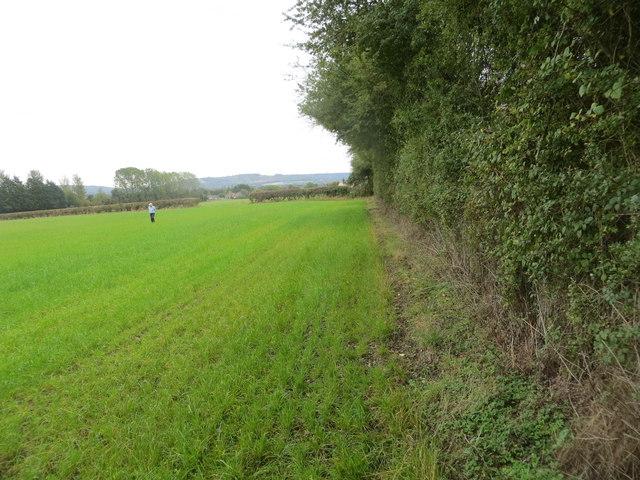 Field edge beside railway