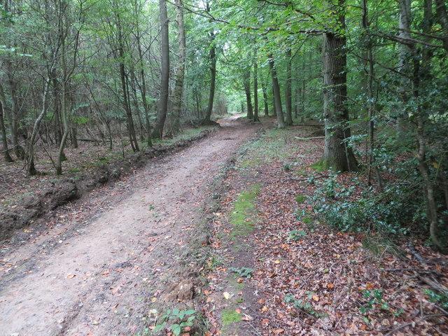 Track through Great Widmoor Wood