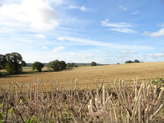 Looking across the fields to Twizell Hall