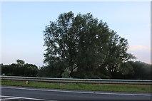 TL0146 : Tree by The Branston Way, Kempston by David Howard
