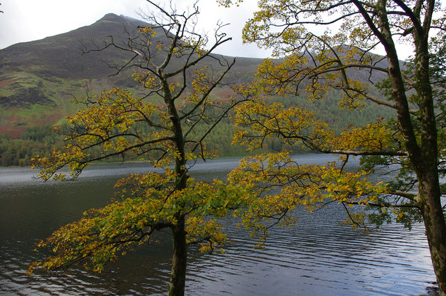Sycamore trees, Buttermere