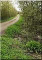 ST4230 : Mildmay's Road by Derek Harper
