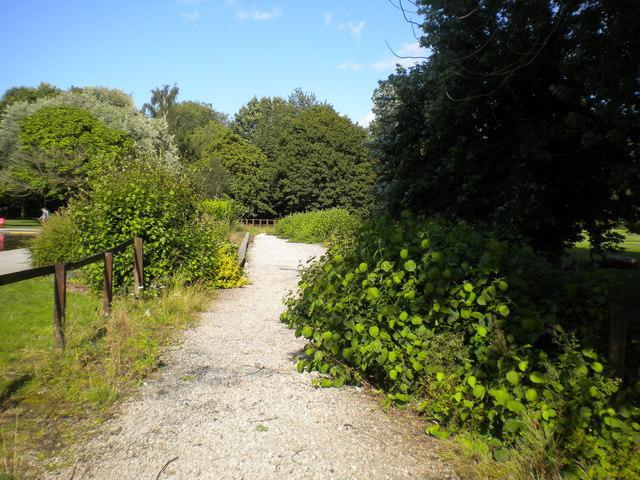 Remains of the Markeaton Park Light Railway (3)