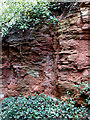 SO8297 : Red sandstone exposure south of Pattingham, Staffordshire by Roger  Kidd
