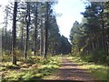 NO4827 : National Cycle Network route 1 in Tentsmuir Forest by Oliver Dixon