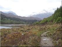 NH0155 : Path beside Loch Coulin by Richard Webb