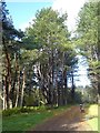 NO4926 : Forest road in Tentsmuir Forest by Oliver Dixon