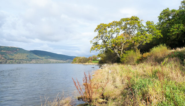 Vegetation along shore of Loch Fyne