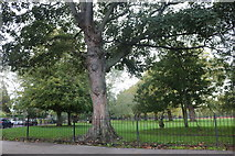 TQ3484 : London Fields, Dalston by David Howard