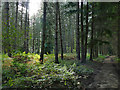 SE2508 : Ferns in Deffer Wood by Stephen Craven