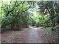 TQ3353 : Path through woodland near Godstone by Malc McDonald