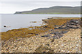 HY2403 : Seaweed on the shore at Moaness by Bill Boaden