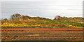 NT9951 : Sidings, East Coast Main Line, Tweedmouth by Robin Webster
