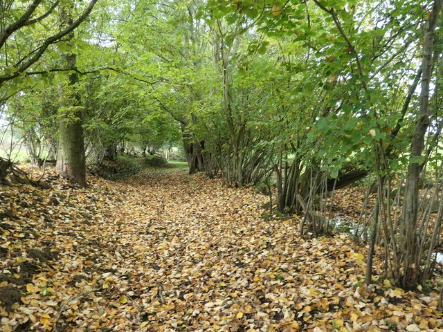 Fallen leaves on the footpath near Aimbank by Christine Johnstone