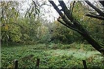 SU0982 : Woods by Swindon Road east of Royal Wootton Bassett by David Howard