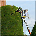SJ2106 : A yew trimmer at work by Robin Drayton