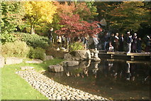 TQ2479 : View of the pond in the Kyoto Gardens in Holland Park #5 by Robert Lamb