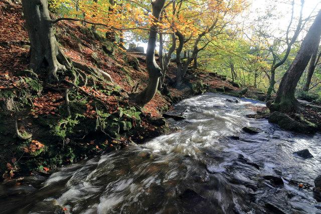 The Bentley Brook in full flow