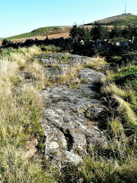 Blackshaw Cup and Ring-marked Rock - West Kilbride