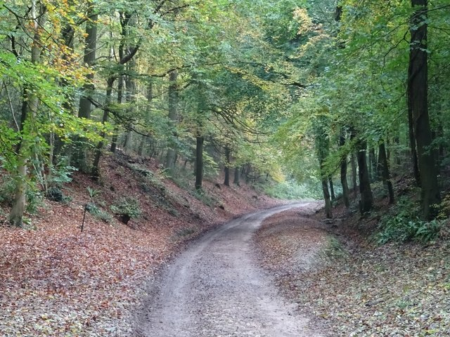 Drive in Woodchester Park