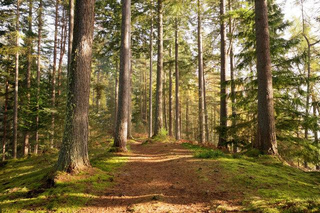 Esker ridge in Evanton Community Wood