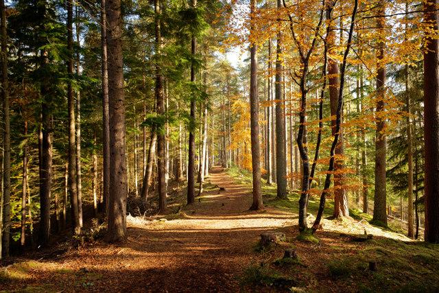 Path along the esker, Evanton Community Wood