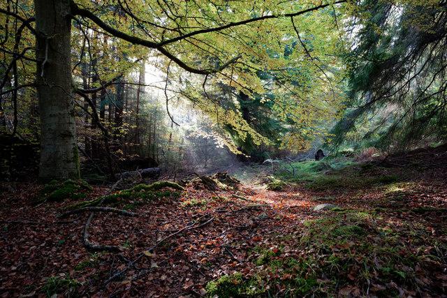 Beside a path in Evanton Community Wood