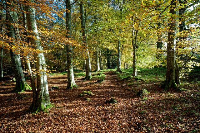 Western margin of Evanton Community Wood