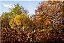 NH5966 : Autumn in Evanton Community Wood by Julian Paren