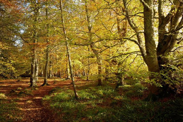Autumn in Evanton Community Wood