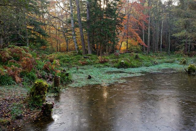 Frozen lochan in Evanton Wood