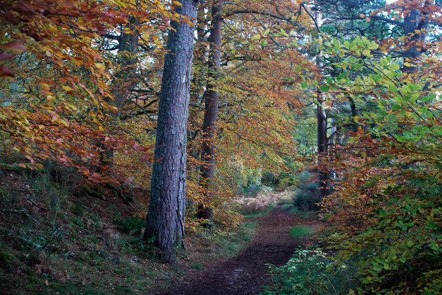 Track by the River Beauly beside Balblair Wood