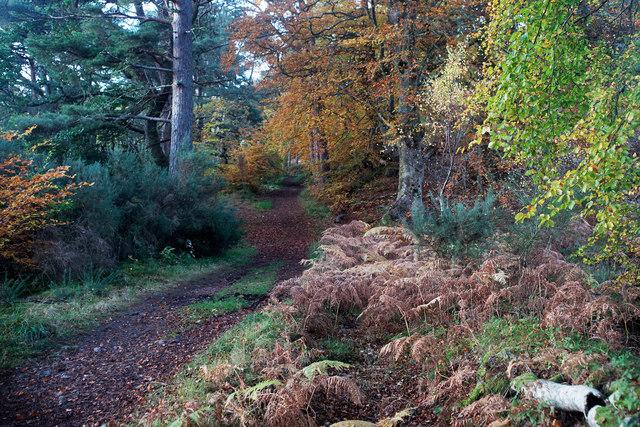 Track towards Black Bridge in Balblair Wood
