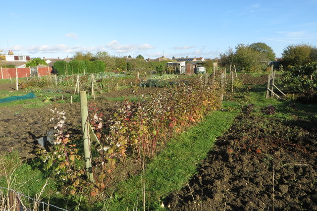 Allotments by the bridleway