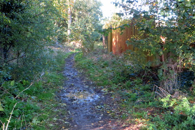 Bridleway goes into the spinney