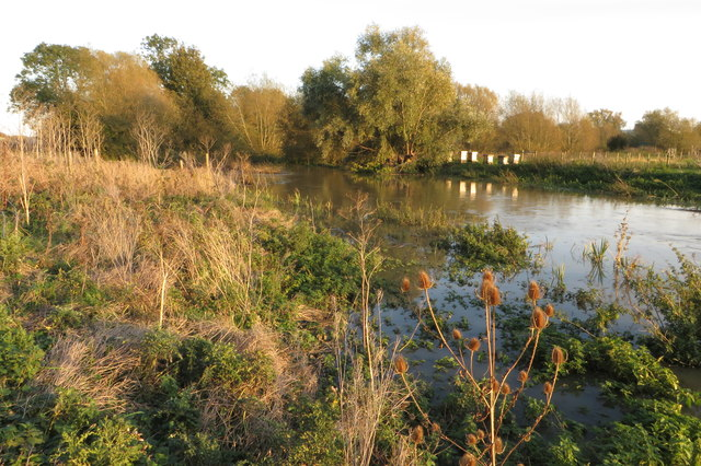 Beehives on the banks of the Nene