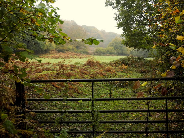 Field by the Fedw Brook